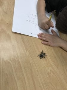 Student drawing an insect with a pencil with a toy insect next to him to look at