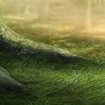 greatbooks-forest-header