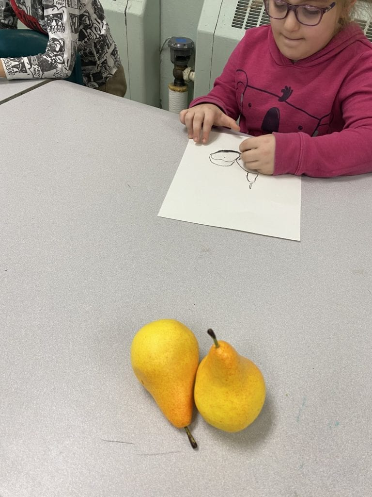 Here is a student drawing two pears on her white paper with black crayons as she looks at the two real pears in front of her on her table