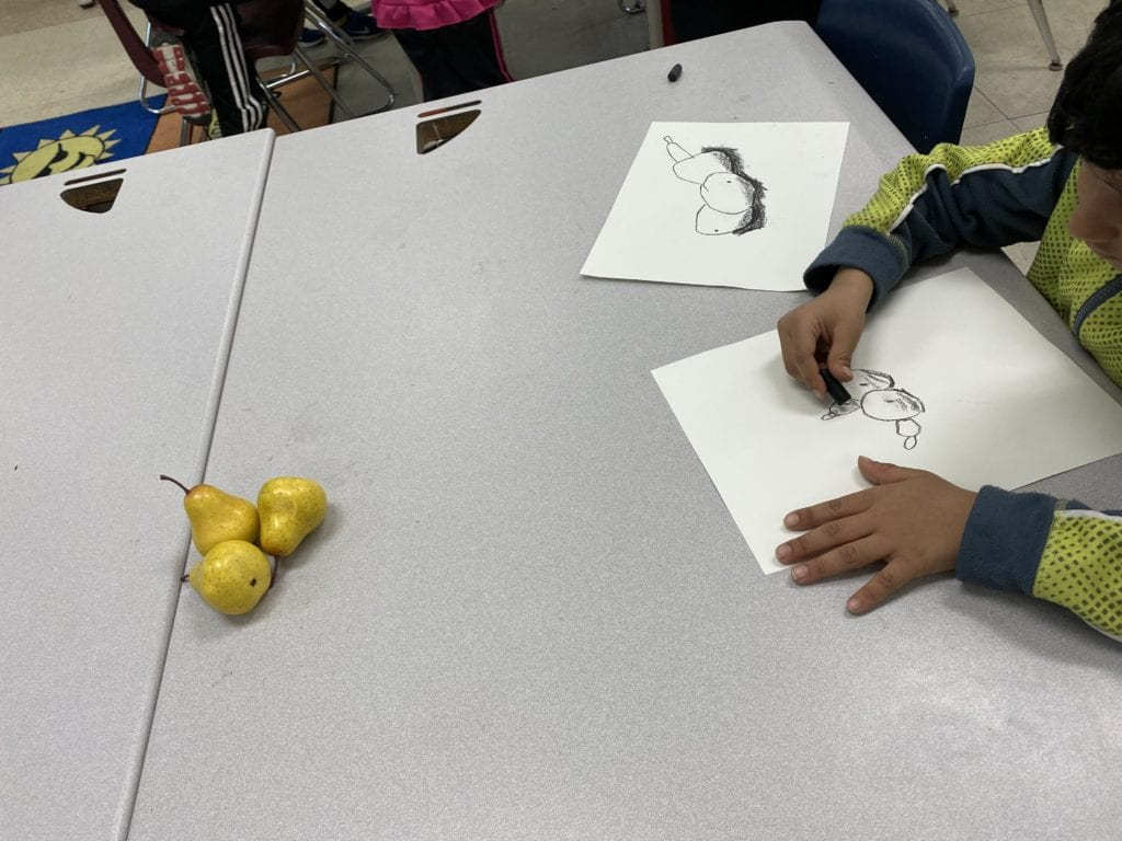 Here is a student drawing pears with a black crayon and three pears are sitting on the table in front of him