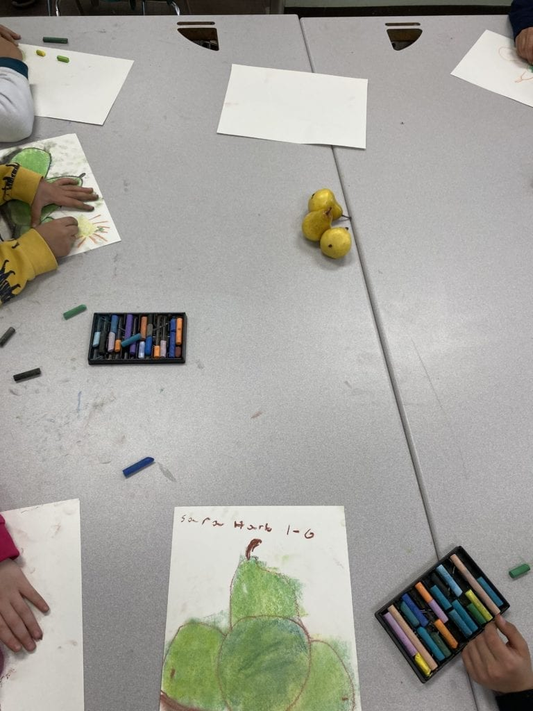 students coloring in their pear drawings with chalk, three pears sit in the middle of the table