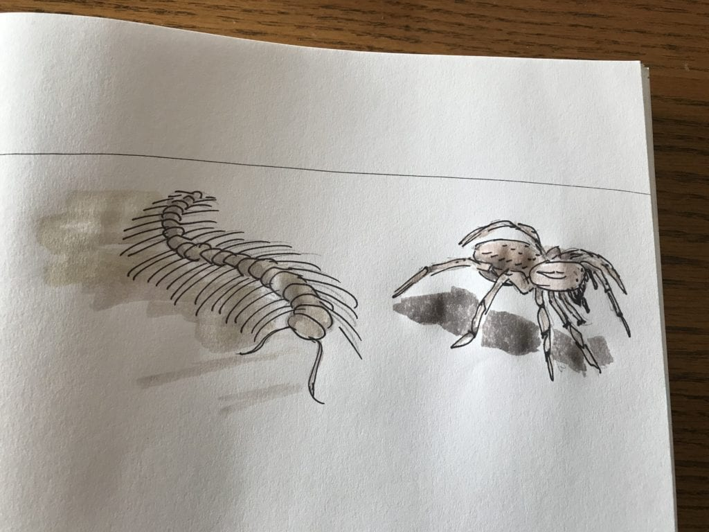 drawing of a centipede and a trantula