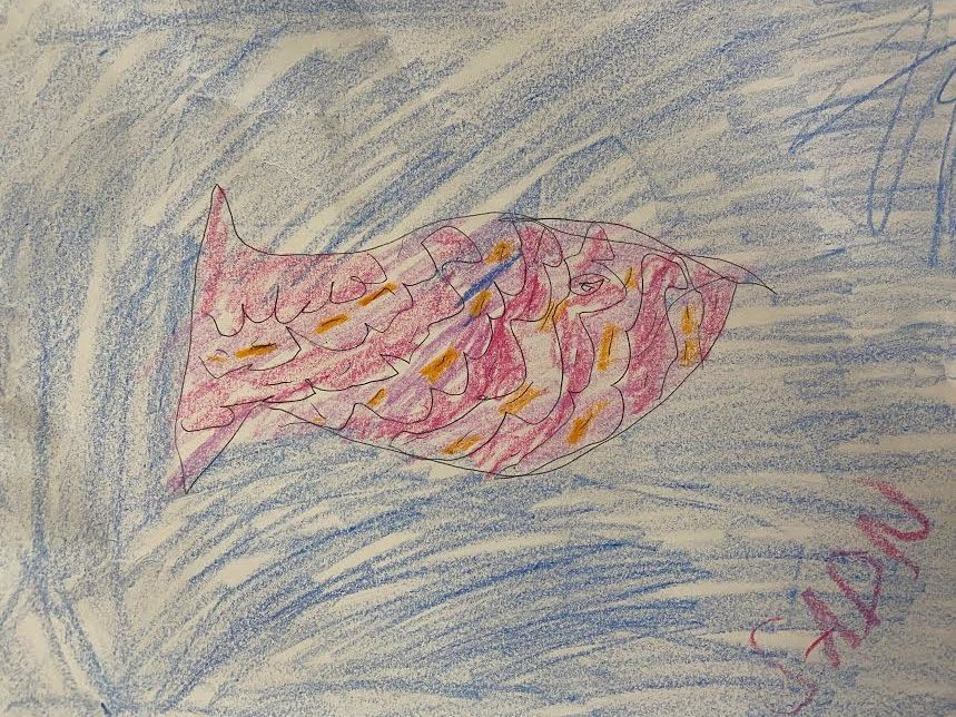 pink and orange fish drawing
