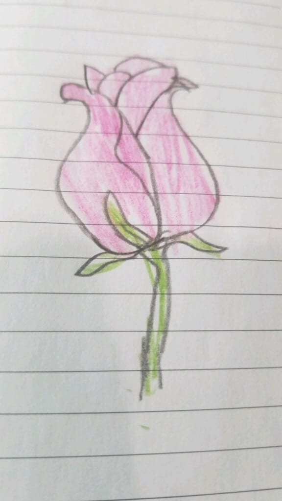 drawing of a pink rose