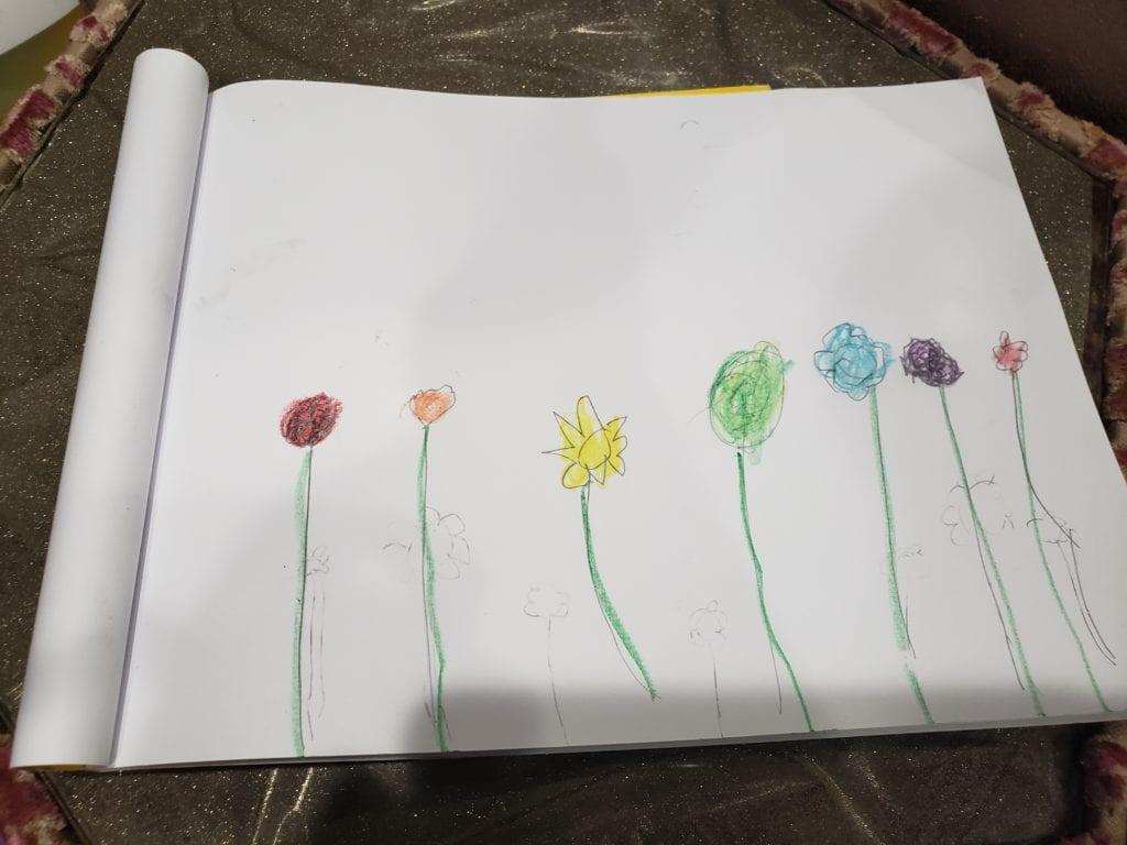 drawing of 7 flowers colored in the rainbow order