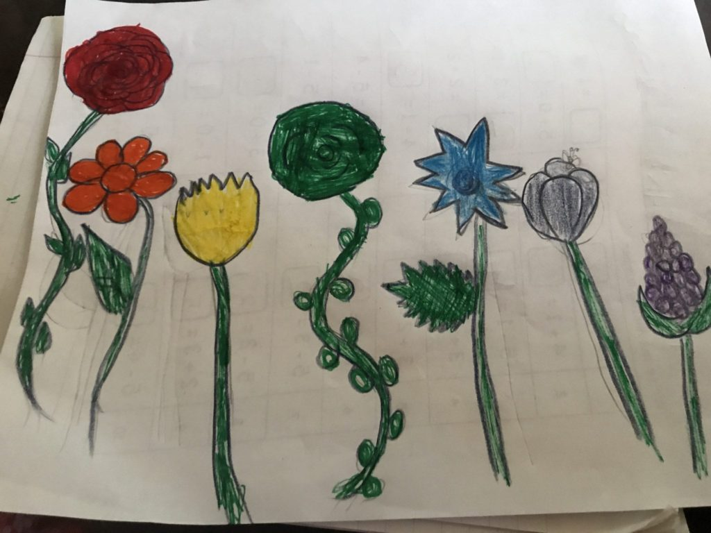 drawing of seven flowers colored in the rainbow order