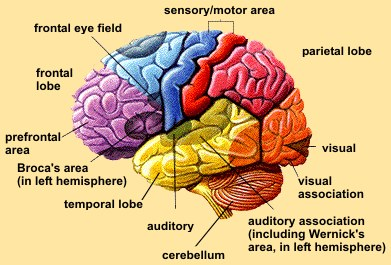 Psychology | Mrs. Ayoub